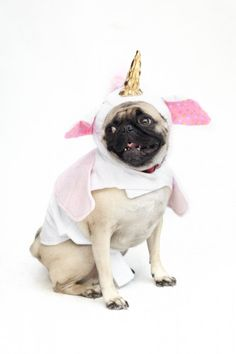 20 ridiculously cute dog Halloween costumes! Photos by Winnie Au
