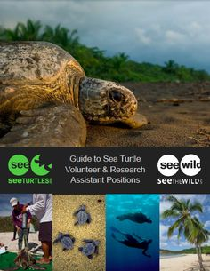 Download our guide to volunteering on a sea turtle project!