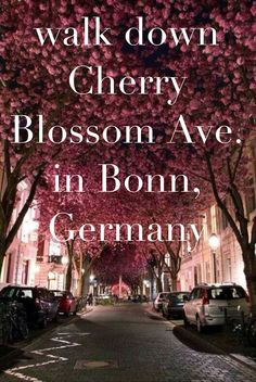Walk down Cherry Blossom Ave. in Bonn, Germany