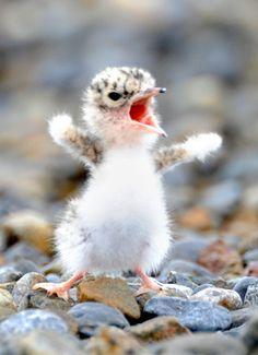 I'm An Eagle! I'm An Eagle!