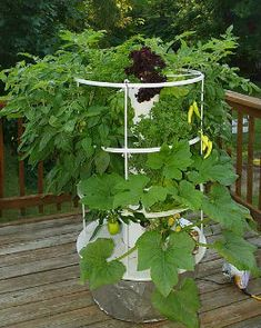 aeroponics, vegetables, plants