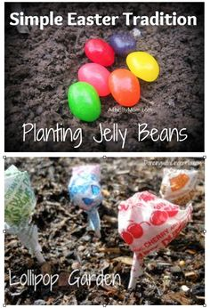 Growing a Jelly Bean Garden - a fun tradition to plant jelly beans the night before Easter and lollipops grow overnight!
