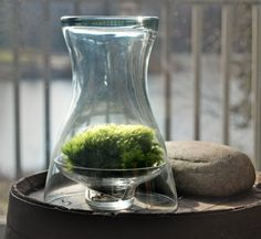 DIY terrarium garden under glass vase or large drinking glass. clever