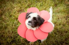 Make Your Own Pet Costumes