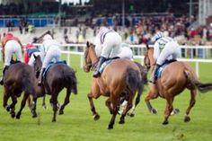 #Dubai World Cup Horse Race Event, #stepbystep