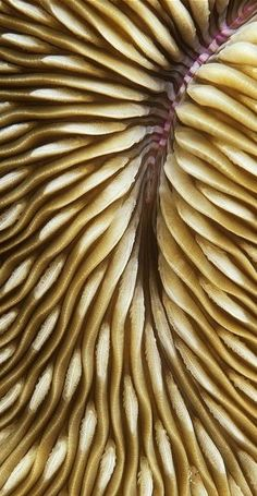 #Mushroom coral #texture