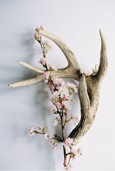 Antler camo decor ideas on pinterest antlers antler for Antlers for decoration