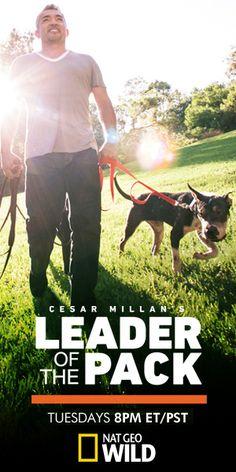 Cesar Millan dog advice