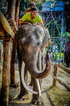 adventure and elephants