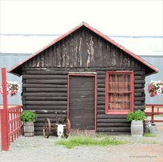 farm lynda, alaska live, cabin live, alaska dream, logs, farms, alaska cabin, log cabins, alaska ppp