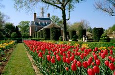 Gardens in Williamsburg,VA