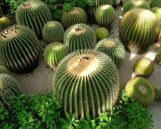 ARTE Y JARDINERÍA DISEÑO DE JARDINES: Cactus. El desierto en casa