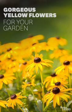 Click through for our favorite yellow flowers to perk up your garden space: http://www.bhg.com/gardening/design/color/yellow-flower-garden-ideas/?socsrc=bhgpin101514sunflower