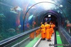 Phuket, Thailand -- Phuket Aquarium.     Not sure if it's worth checking out considering Shedd Aquarium here.