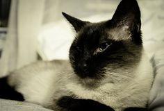 Sassy by NykBoogie, via Flickr