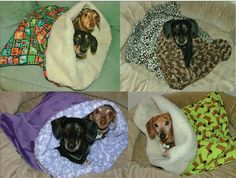 small dogs, doggie beds, bed stuff, dachshund, sleeping bags