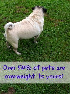 Overweight Pets Are