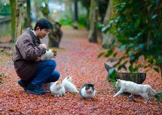 京都の猫 Cats in Kyoto, Japan
