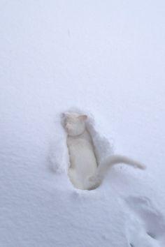 Snow kitteh