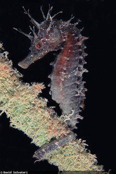 The best submarine macro life in Europe | David Salvatori & the Macro Underwater Photography in Italy