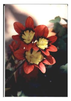 Spring flowers from the garden of Antonio Castro.