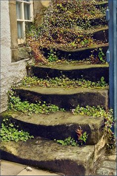 Flowered Stone Stairs in Scotland.