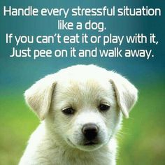 Dogs have it right :)