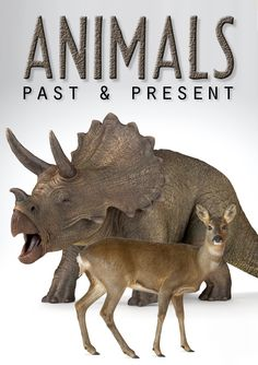Join us on a fascinating journey through history to learn all about animals of the past and present!