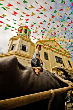 Water Buffalo festiv
