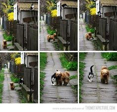 Every Day, Same Time    Every day, at the same time, she waits for him. He comes, and they go for a walk.