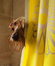 anim, dogs, dog photos, towel, shower, dog photography, puppi, dog portraits, bath time