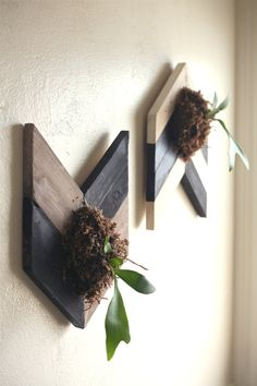 Love these chevron mounted staghorn ferns by SilenceInHeaven on Etsy