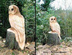 beauti bird, feather friend, crafti item, bird beauti