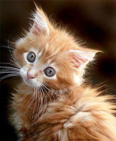 Animales Tiernos - Cute Animals