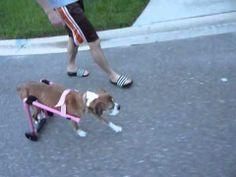 allie's New Dog wheelchair