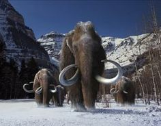 NOW SHOWING!  Titans of the Ice Age in 3-D @fieldmuseum