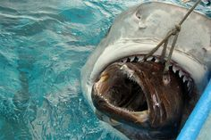HEY SHARK THATS MY FISH!