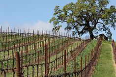 Seasons of the Vineyard: a photo essay - Jordan Winery