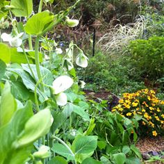 How to Extend Your Growing Season: Organic Gardening  TheTankFarm.org