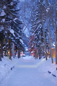 Christmas - Aspen Mall Path