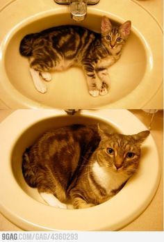 The sink is getting full...