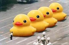 all hail the mighty rubber duck