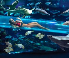 The Tank in Las Vegas, NV--The pool surrounds an aquarium filled with lots of fish and even sharks!