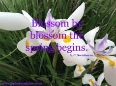 Blossom by blossom the spring begins. A.C. Swinburne