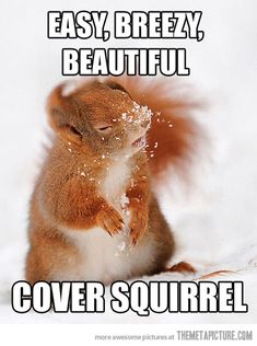 Easy, breezy, beautiful. cover squirrel