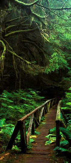 Footbridge in the forest of Mt. Rainier National Park in Washington