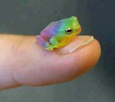 Little rainbow frog. This just made my day.