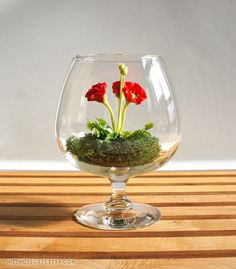 Tiny Red Poppy Woodland Terrarium in Brandy Glass by Miss Moss