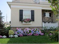 idea, hydrangea house, hydrangeas front of house, hydrangea in front of house, flowers, brick house cream, flower boxes, hydrangea porch