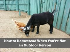 How to Homestead When You're Not an Outdoor Person